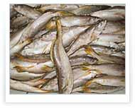 King Weakfish | Packing of 20 KG. Land forzen
